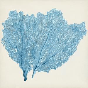 Sea Fan IV by Tim O'toole