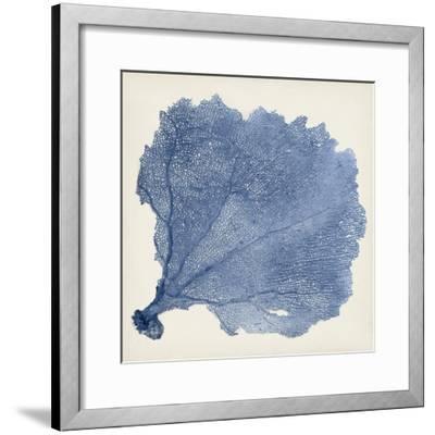 Sea Fan V by Tim O'toole