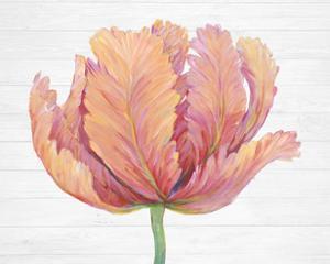 Single Pink Bloom I by Tim O'Toole