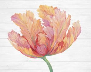Single Pink Bloom II by Tim O'Toole