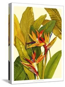 Tropical Bird of Paradise by Tim O'toole