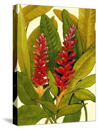 Tropical Red Ginger