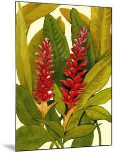 Tropical Red Ginger by Tim O'toole