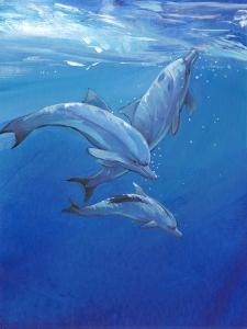 Under Sea Dolphins by Tim O'toole