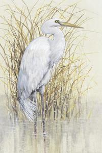 Wading I by Tim O'Toole