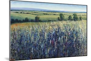Wildflower Vista by Tim O'toole