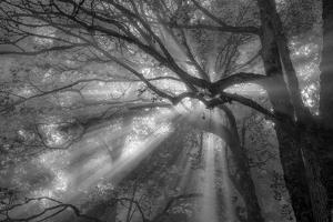 Forest Fog by Tim Oldford