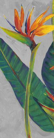 Bird of Paradise Triptych I by Tim OToole