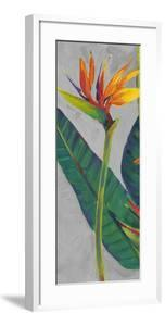 Bird of Paradise Triptych I by Tim OToole