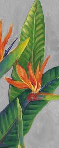 Bird of Paradise Triptych III by Tim OToole