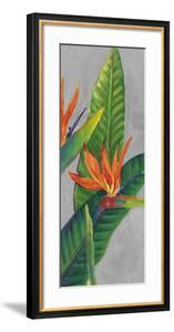Bird of Paradise Triptych III by Tim OToole