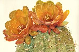 Cactus Blossoms II by Tim OToole