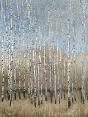 Dusty Blue Birches I by Tim OToole