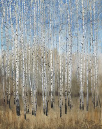 Dusty Blue Birches II by Tim OToole