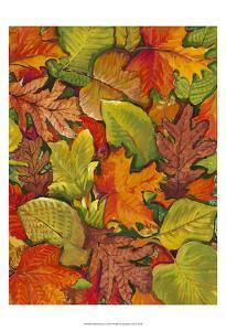 Fallen Leaves I by Tim OToole