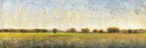 Flowering Meadow II by Tim OToole