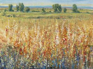 Gold and Red Field II by Tim OToole