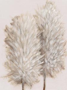 Pampas Grass III by Tim OToole