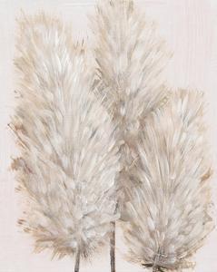 Pampas Grass IV by Tim OToole