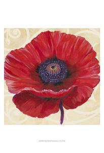 Red Poppy II by Tim OToole
