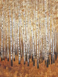 Sienna Birches I by Tim OToole