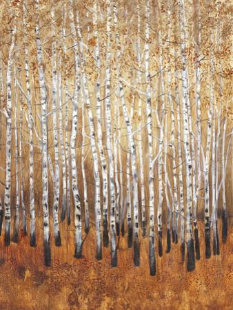 Sienna Birches I by Tim OToole