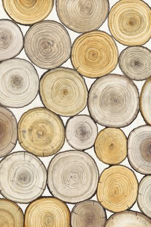 Tree Ring Study II by Tim OToole