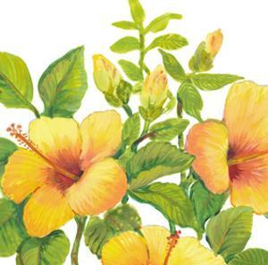Watercolor Hibiscus I by Tim OToole