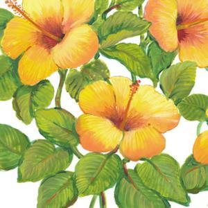 Watercolor Hibiscus III by Tim OToole