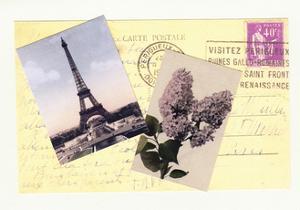 Travel Paris Flower by Tim Wright