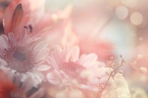 Abstract Flower Background by Timofeeva Maria
