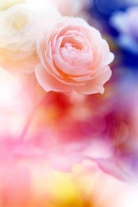 Beautiful Flowers Made with Color Filters and Textures by Timofeeva Maria