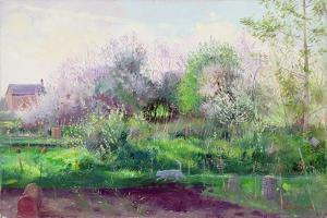 Allotment Stalker, 1991 by Timothy Easton