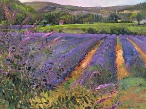 Buddleia and Lavender Field, Montclus, 1993 by Timothy Easton