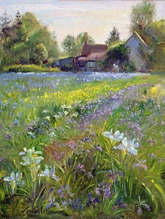 Dwarf Irises and Cottage, 1993