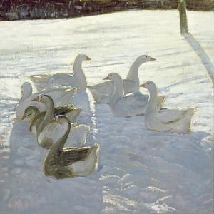 Geese Against the Light by Timothy Easton