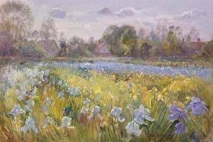 Iris Field in the Evening Light, 1993 by Timothy Easton