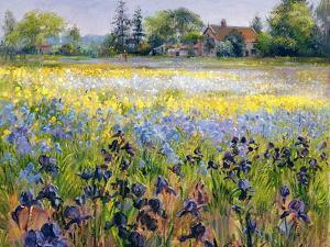 Irises and Two Fir Trees, 1993 by Timothy Easton