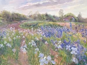 Sunsparkle on Irises, 1996 by Timothy Easton