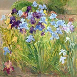 The Iris Bed, Bedfield, 1996 by Timothy Easton