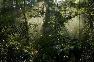 Early Morning Light in the Rain Forest of Halmahera Island, Indonesia by Timothy Laman