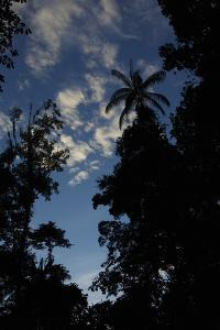 Rainforest Silhouette Against Early Morning Sky by Timothy Laman