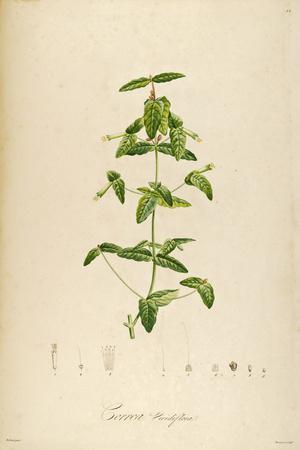 Vintage Botanical 192