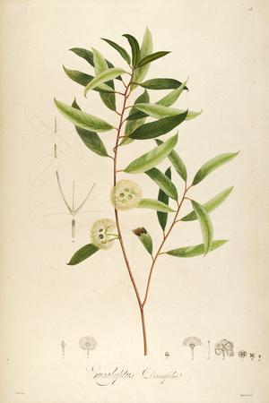 Vintage Botanical 194