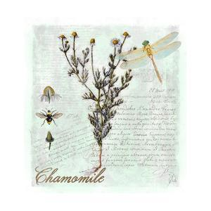Chamomile Herb by Tina Lavoie