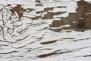 Whitewash 001 by Tina Lavoie