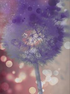 Wishful Thinking I by Tina Lavoie
