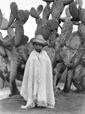 Boy in Front of a Cactus, State of Veracruz, Mexico, 1927