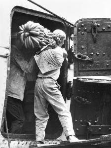 Workers Loading Bananas, Veracruz, 1927 by Tina Modotti