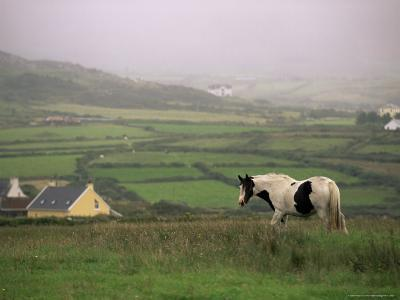 Tinker Horse Near Allihies, Beara Peninsula, County Cork, Munster, Republic of Ireland (Eire)-Patrick Dieudonne-Photographic Print